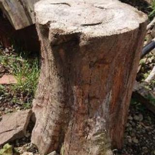 【無料】伐採、倒木、伐根、無料回収します。(個人)
