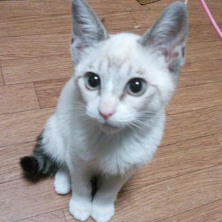 子猫を保護しております。里親募集!カワイイです~★