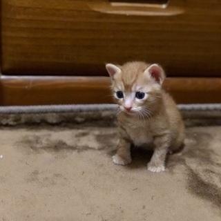 可愛いおチビちゃんの里親様募集❣️ - 猫