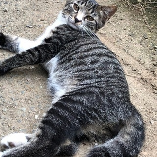 生後4カ月位の兄妹猫 外猫です。避妊去勢済み。