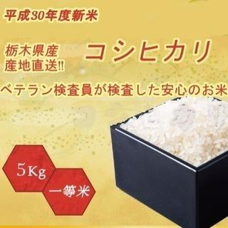 平成30年度産新米 コシヒカリ 精米5kg 栃木県北産