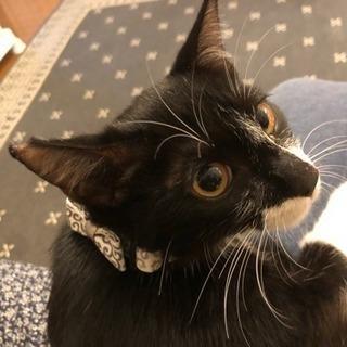 【黒白子猫☆クッキー】