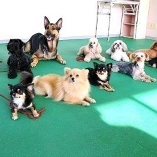 やってみたら楽しい!犬が好きを仕事に!生徒募集中10月生・4月生!...