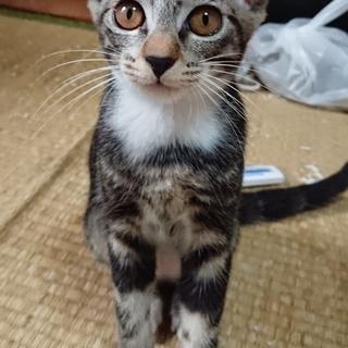 近所で生まれた子猫3~4ヶ月 - 横須賀市