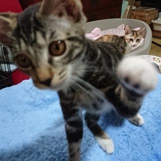 近所で生まれた子猫3~4ヶ月 - 猫