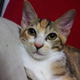 近所で生まれた子猫3~4ヶ月(メス)