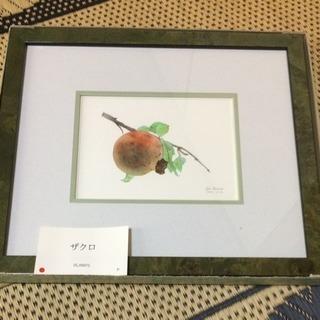 絵画 ザクロ 箱あり 定価¥25,000