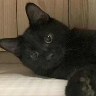 真ん丸お目目の黒猫!