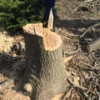 樹木の伐採を無償で行います🌲