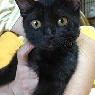 2ヶ月半の黒猫の男の子