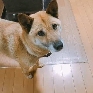 【7歳犬】人懐こい女の子です♪10キロ