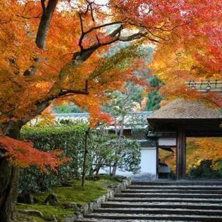 『鈴虫寺へ行きませんか😄』