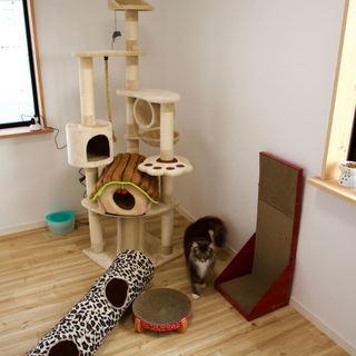 猫専用個室『ねこべや』ケージレスのペットホテル【送迎無料】|名古屋市