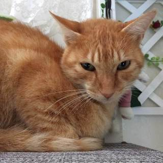 とてもなつっこい茶トラの捨て猫を発見・保護しました − 福島県