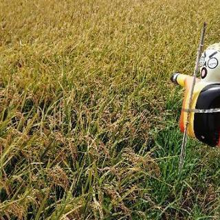 高品質☆先端農家のお米ミルキークイーン