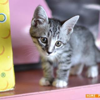 保護猫:大分、宇佐市、2ヶ月半の男の子