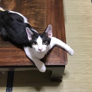 甘えん坊で可愛いオスの子猫ちゃんの画像