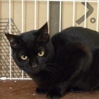 とても甘えたな可愛い黒猫!