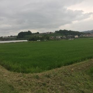 30年度伊賀米コシヒカリ30キロ【残り7つ】