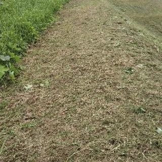 蜂の巣駆除、お庭、お墓の草刈機、剪定、刈り込みをさせていただきます。
