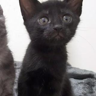 可愛い黒猫くん!1ヶ月半