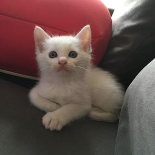 子猫の里親さんになってください!