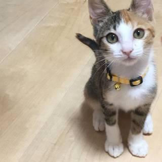 可愛い仔猫の、里親募集中です