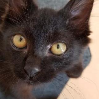 黒猫で大変人懐っこい子です!