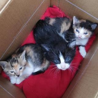 😺赤ちゃんこども親ネコ6匹。