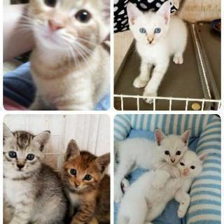 9月17日(月)猫の譲渡会を開催します。