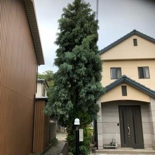 和歌山台風での庭木の倒木などの伐採お任せ