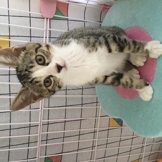 可愛い仔猫の里親さん募集しています