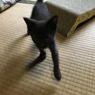 生後3ヶ月 黒猫♂ 里親さんを探しています