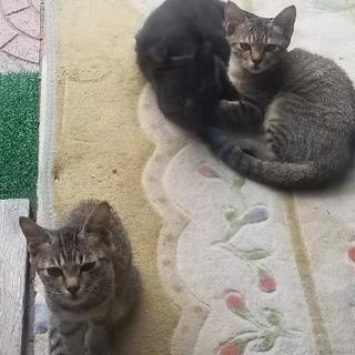 野良猫3兄妹