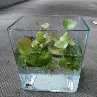 【小型 水槽 水草付き】