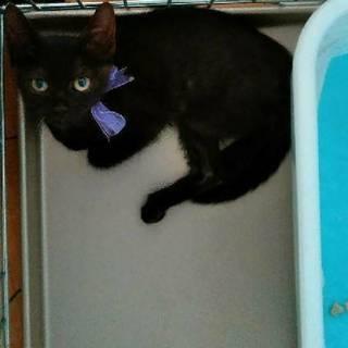 黒子猫 男の子