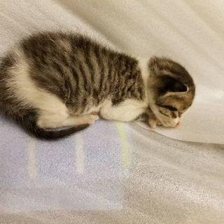 ♡子猫2匹里親募集♡