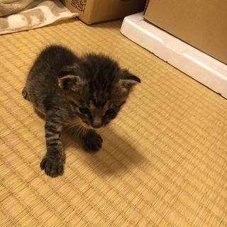 ♡子猫2匹里親募集♡ − 滋賀県
