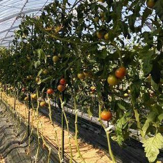 苗植えの単発アルバイト