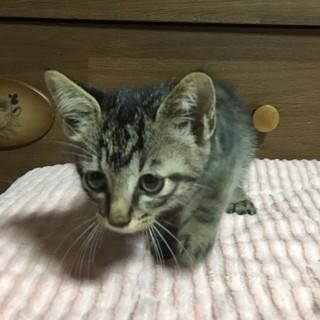 子猫の里親さん募集です(36)