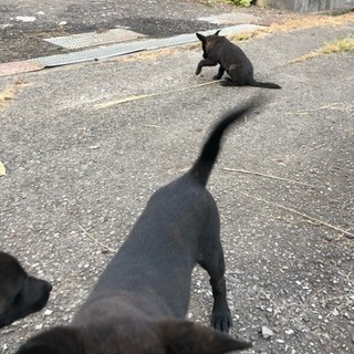 甲斐犬 4匹
