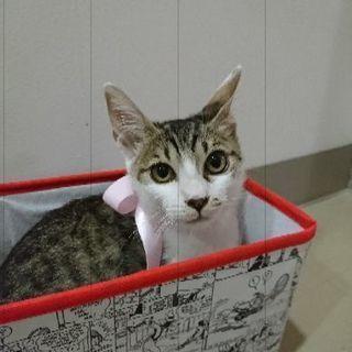 可愛い女の子猫2ヶ月