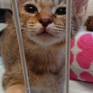 東北道で拾った子猫。届出済み。9/18国見SAで保護しました。お医...