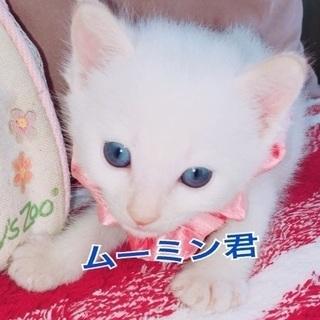 青い目のムーミン君