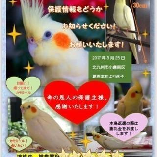 迷子鳥の保護情報を知らせて‼︎
