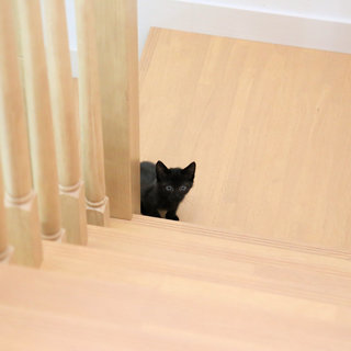 黒猫の子猫を保護しました(里親募集中)治療が終了し目がパッチリにな...