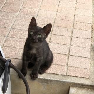 野良猫の子猫です。