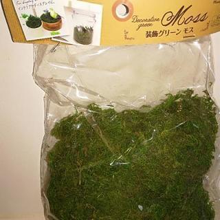 グリーンモス インテリアに苔を飾ろう