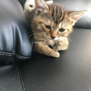 子猫ちゃんの里親さん募集します。