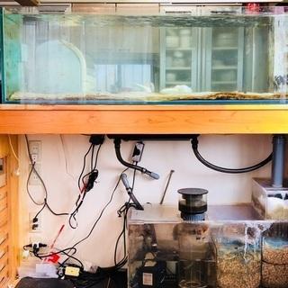令和こんにちは値引きしました!150㎝オーバーフロー ガラス水槽セット!
